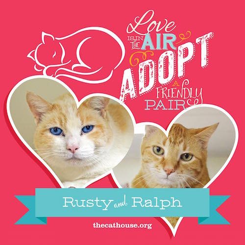 CatHouse_Pairs_rustyralph