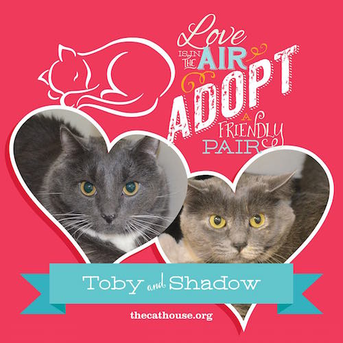 CatHouse_Pairs_tobyshadow